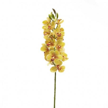 Ramo di 30 Magnolie Gialle D.7xH.82 cm