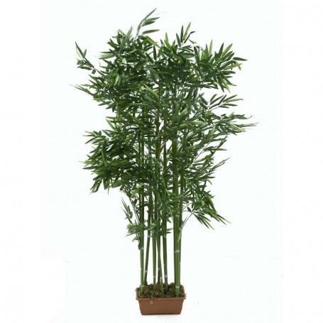 Pianta Bamboo H.175 cm - GS187