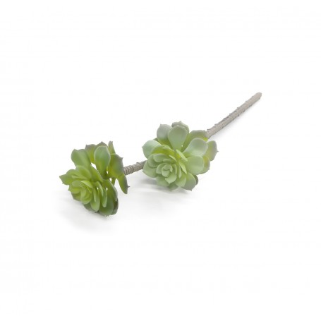 Ramo con 2 Fiori Grassi Verde H.46 cm